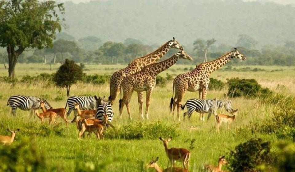 Safaris de chasse