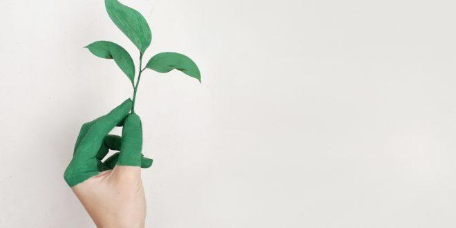 Le concept du développement durable dans le secteur de l'événementiel