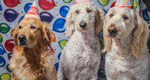 organisateur de fêtes pour chiens
