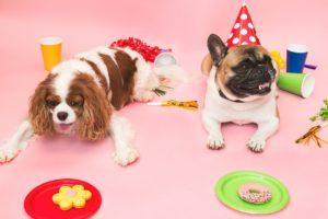 organisateur de fêtes pour chiens collations et décoration